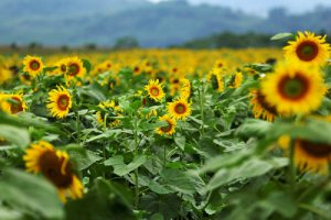 Điểm danh những loài hoa khoe sắc trong tháng 12