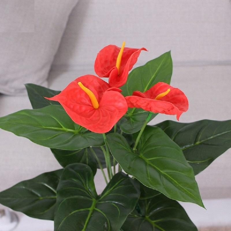 Người mệnh Hỏa hợp với những loại hoa nào?