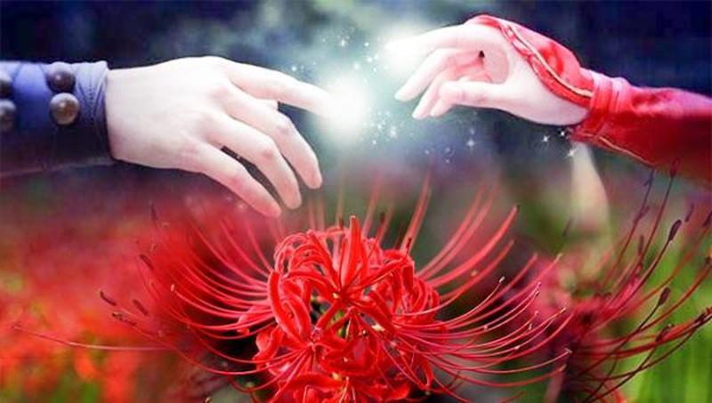 Bỉ Ngạn - Loài hoa của những chia ly, cô độc