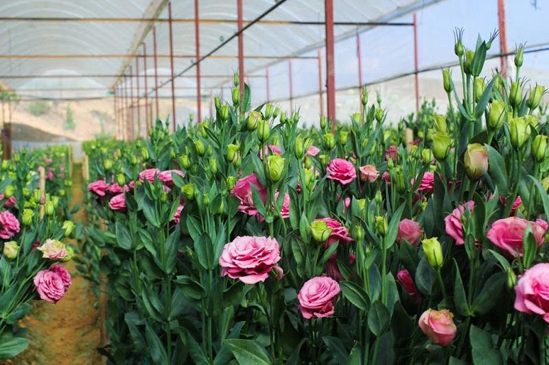 Trang trí nhà ngập tràn không khí Tết với những sắc hoa tươi
